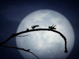 Minuscule - французские короткометражные мультики про насекомых
